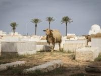 Cemetery, Tunisia