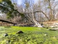 Pond, Vienna